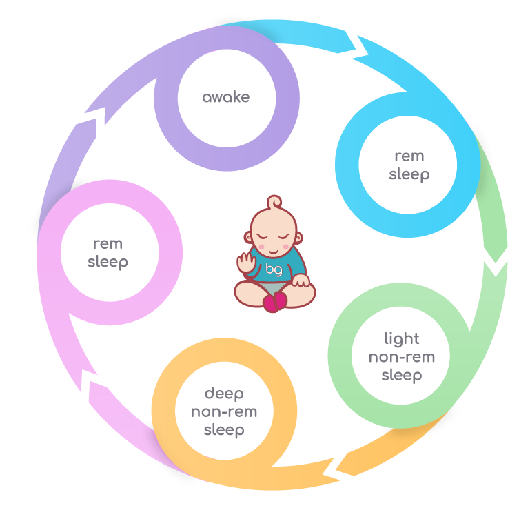 Baby's Night Sleep Cycle